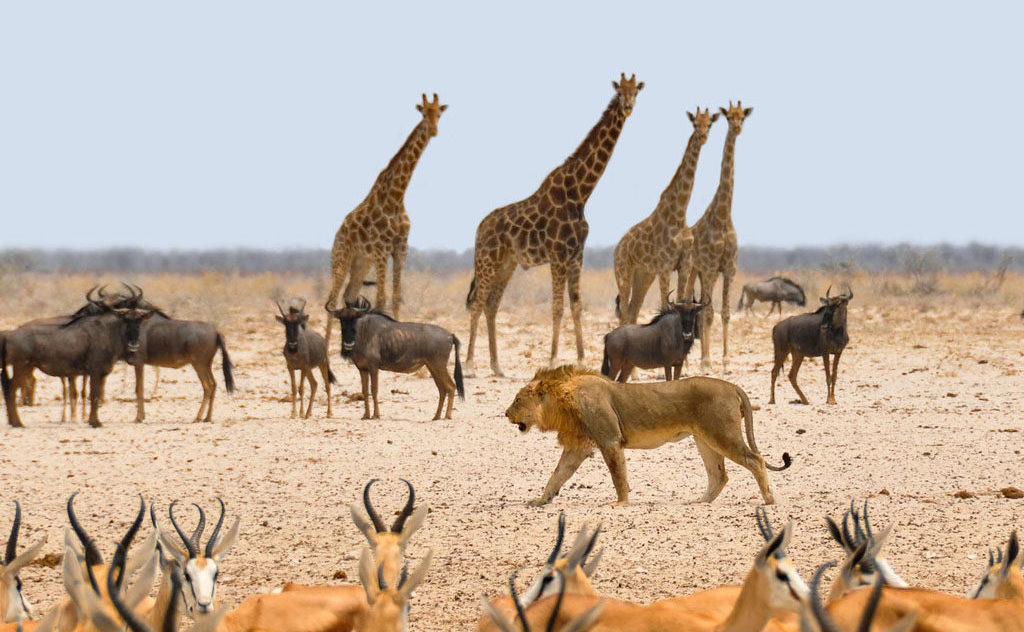 Freie Trauung Afrika