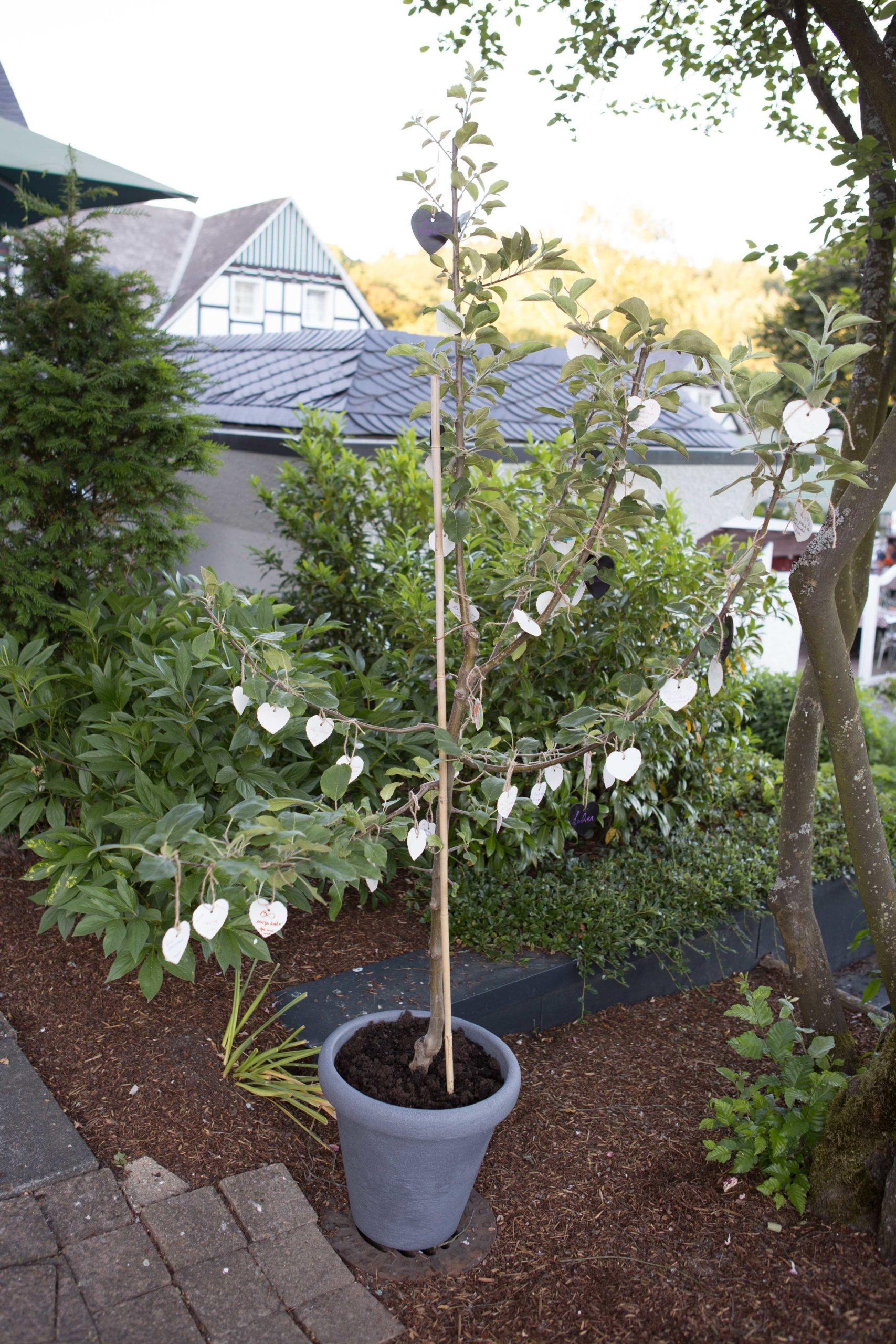 Freie Trauung: Baum pflanzen mit Wunschherzen